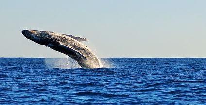 avistamento de ballenas