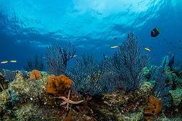 corales y estrella marina