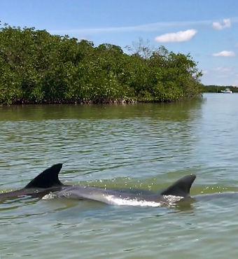 ft myers dolphin tours