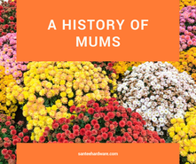 Mums the word