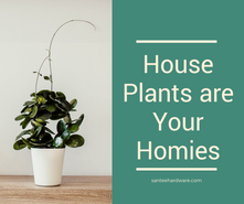 House Plants are Your Homies