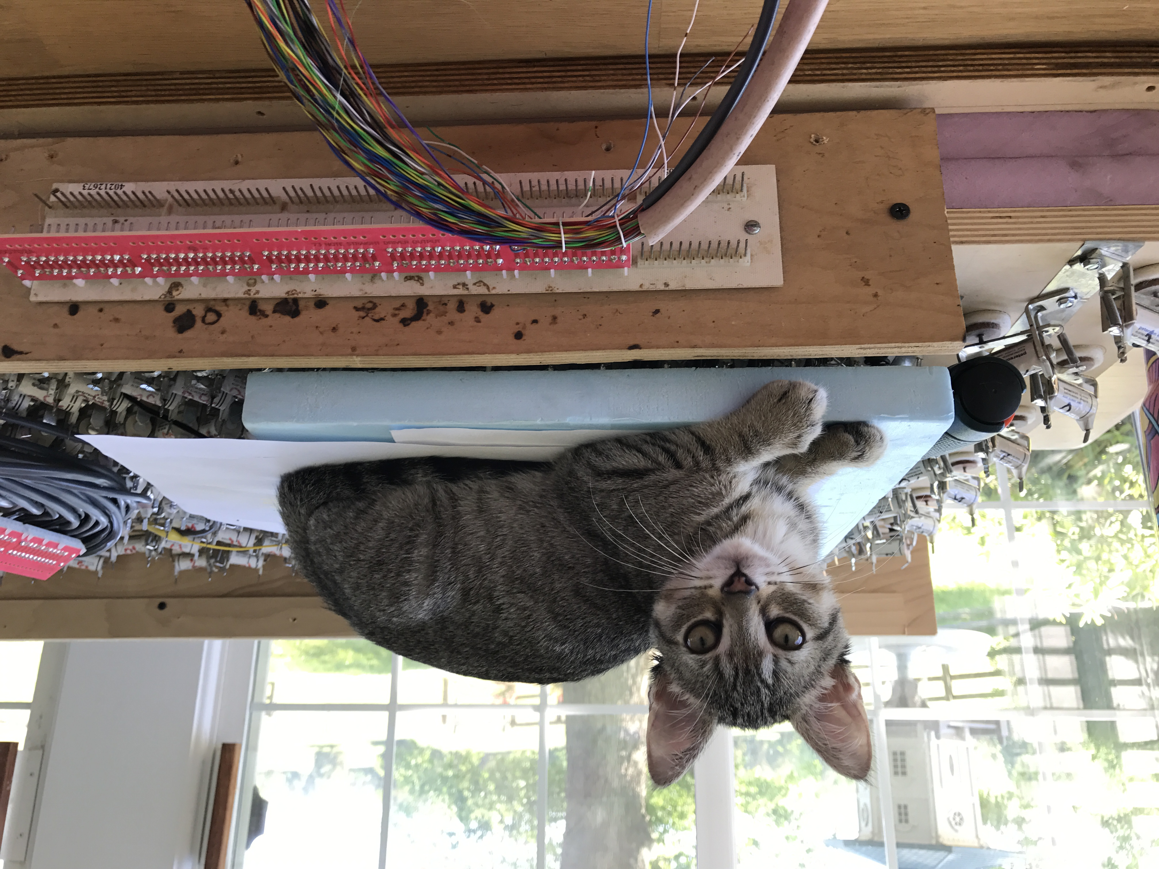 Baby Ziggy likes wiring, too!