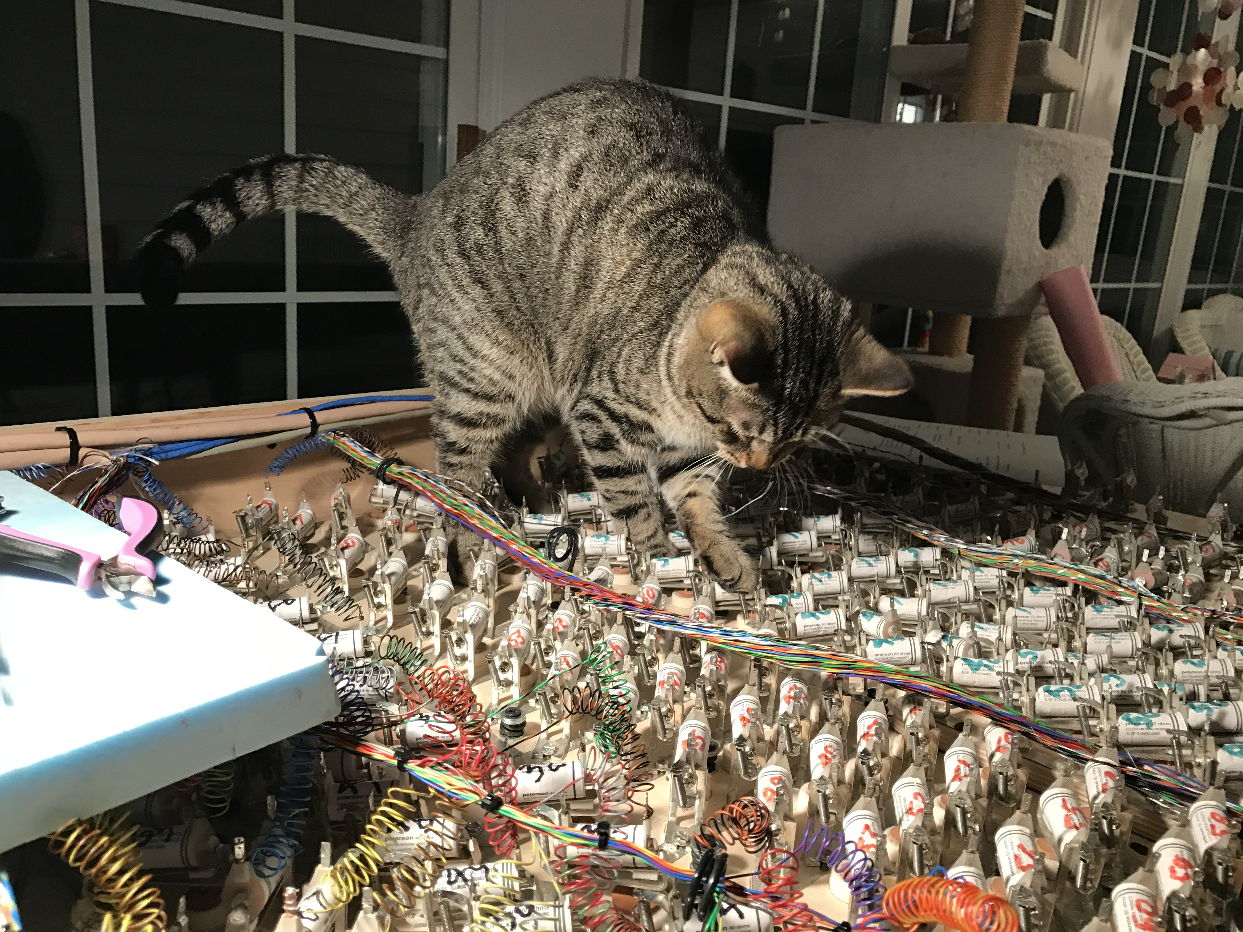 Brillo loves to help with wiring
