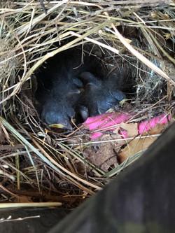 Baby birdies in the shop