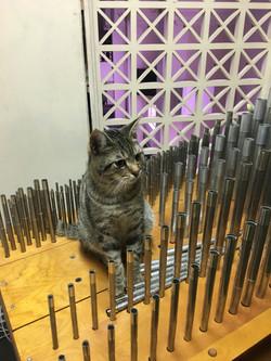 Brillo supervises construction