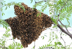 Swarm.PNG
