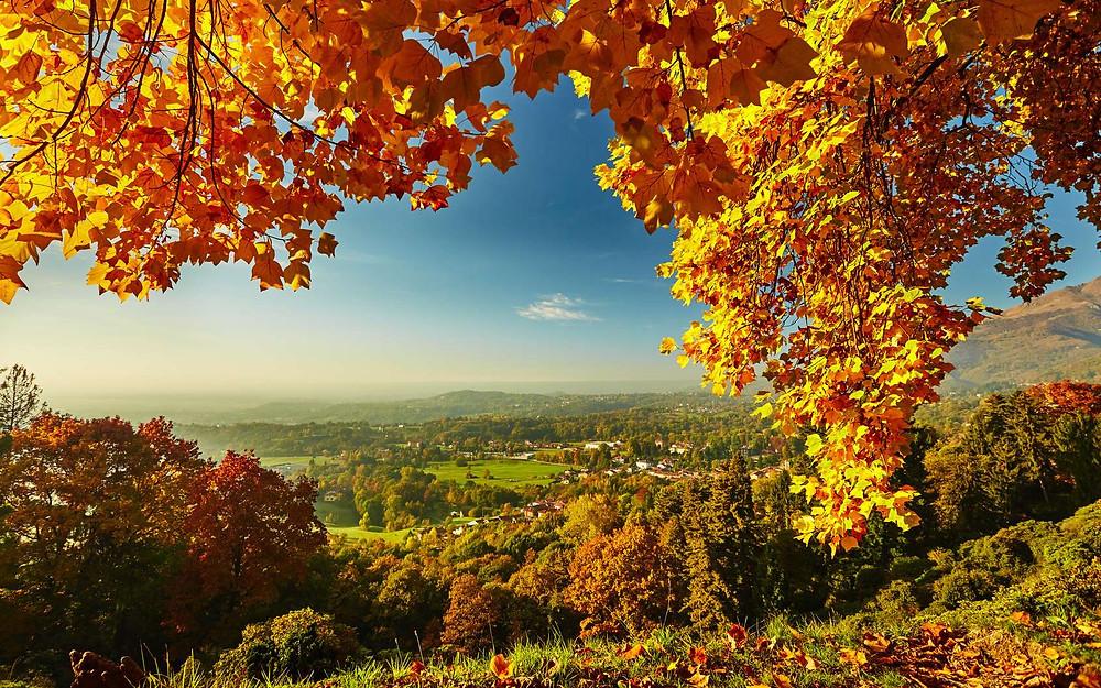L'automne, le meilleur moment pour changer. Javi HORT