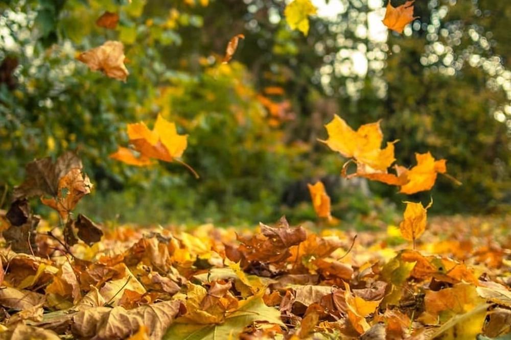 l'automne, le meilleur moment pour changer Javi Hort