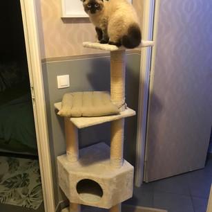 L'arbre à chat de l'étage