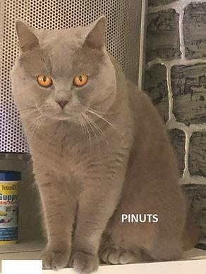 1 PINUTS.jpg