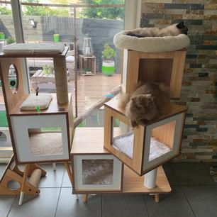 Arbre à chat de la pièce de vie (Vesper avec des modifications maisons)