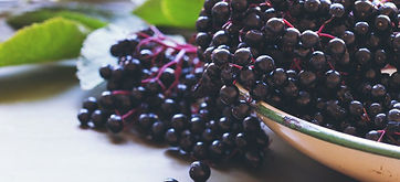 Elderberry_HEADER.jpg