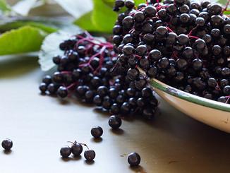 freshelderberries.jpg