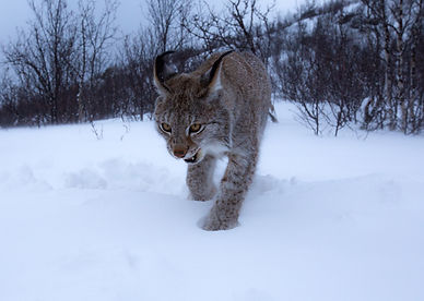 Walking Through Snow