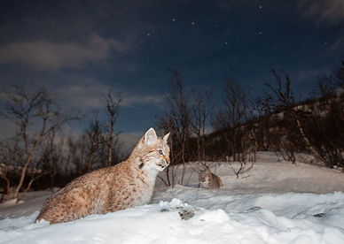 Cats Under The Stars