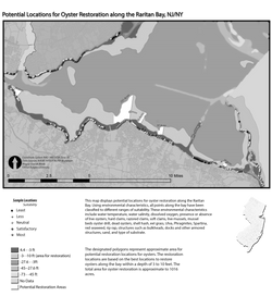 Raritan Bay Oyter Restoration