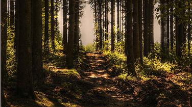 trees-3410846.jpg