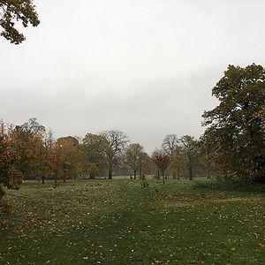 Still beautiful, even in the #autumn #ra