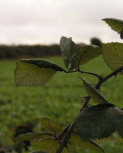 DPTrainingUK Swanage Fields 2006
