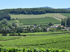 Chardonnay Village Which Gave its Name to the Grappe Variety