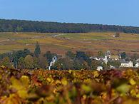 vignes-aloxe-corton-automne.jpg