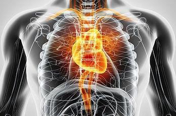circulatory Nicotine.jpg