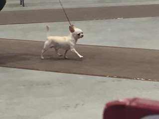 Amazing Dog Show Cluster!