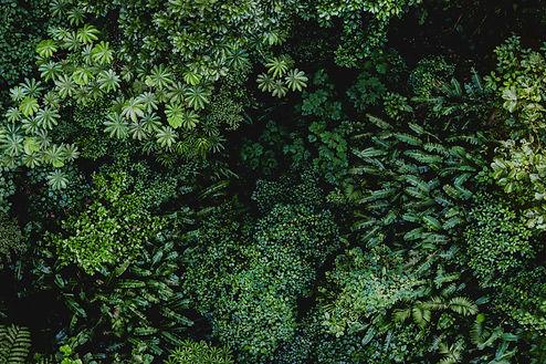 Natur Entspannung