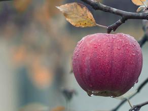 Bearing fruit…