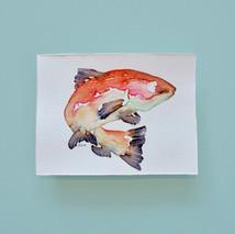 saumon 1 - aquarelle