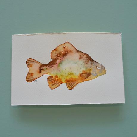 brème 3 - aquarelle