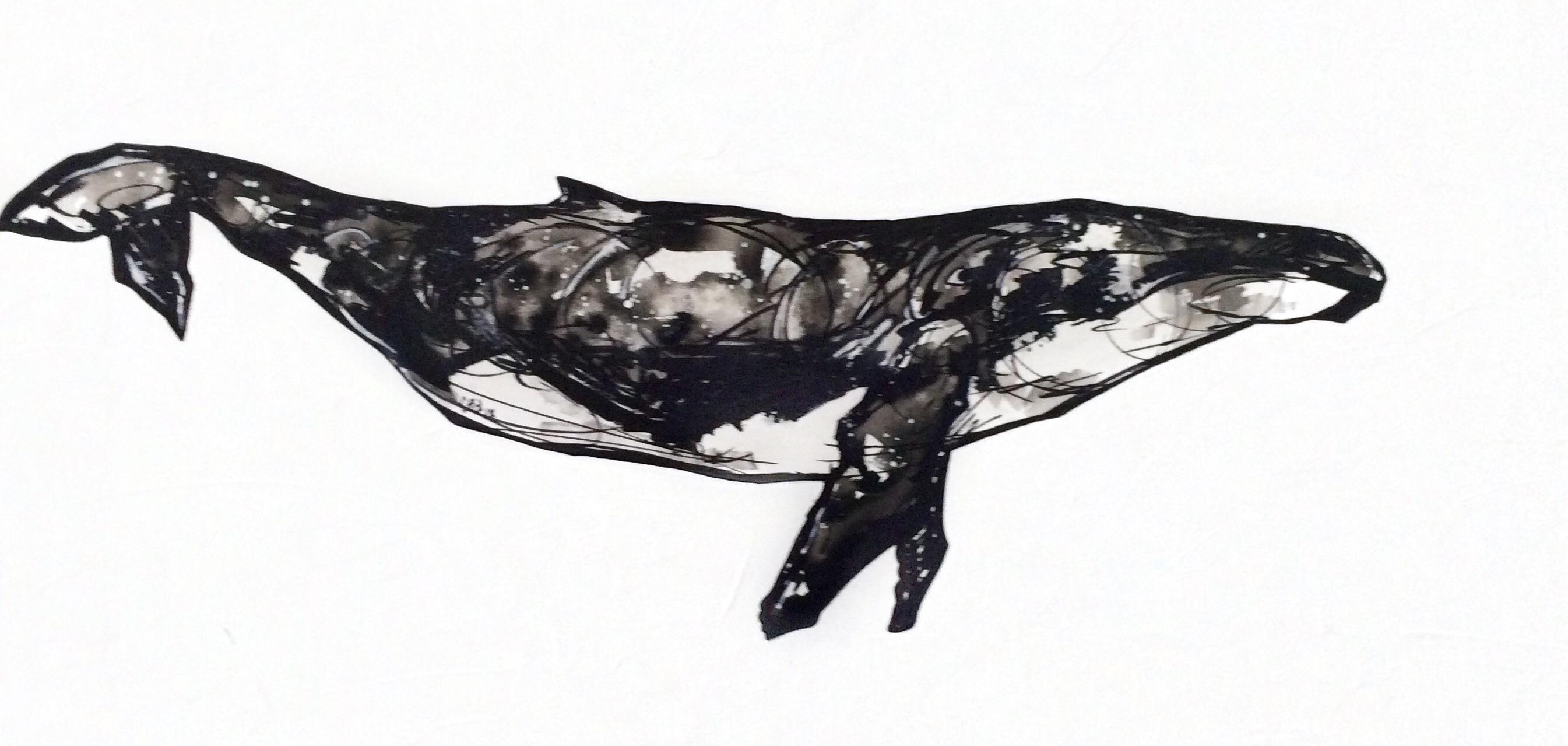 Baleine - Croquis I