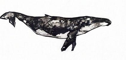 BaleineCroquisI.jpg