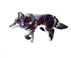 Le Coyote II