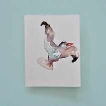 goéland 1 - aquarelle