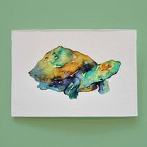 tortue 1 - aquarelle