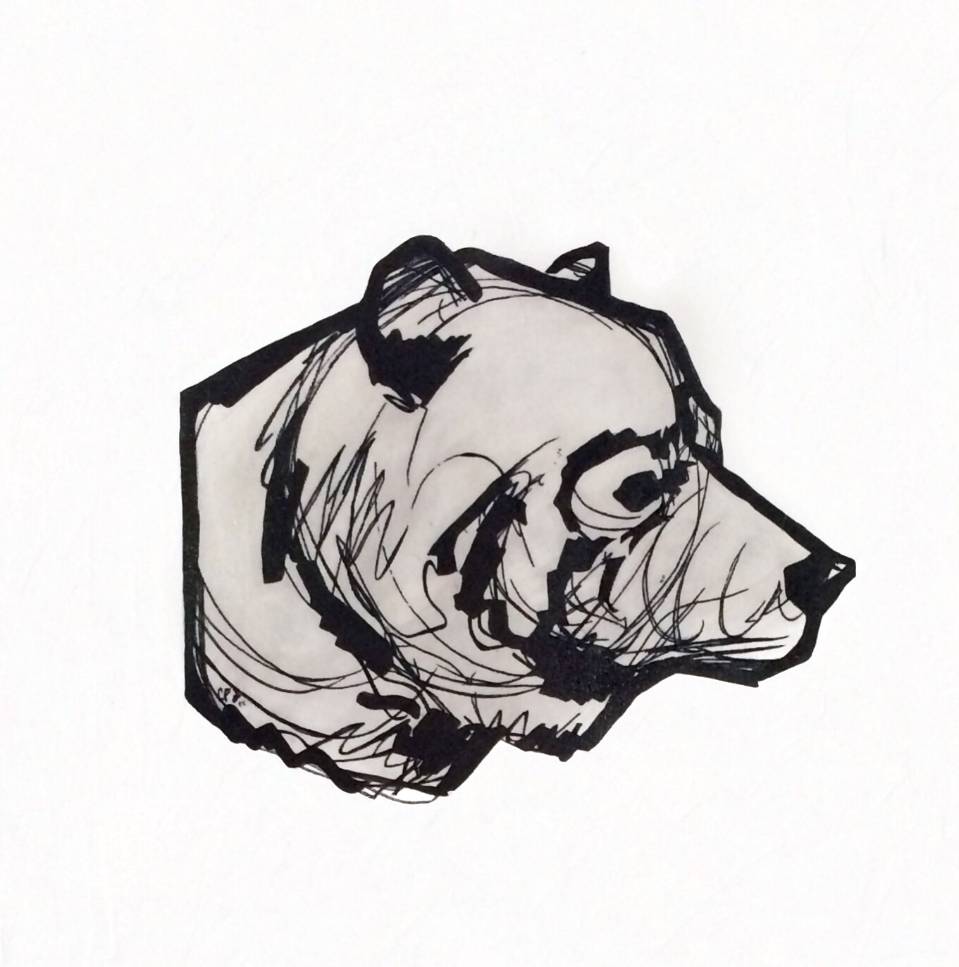 Tête D'Ours - Croquis II