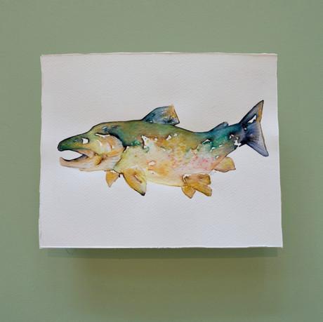 saumon 4 - aquarelle