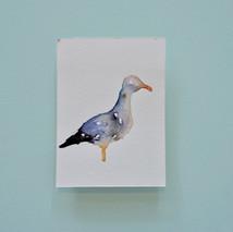 goéland 2 - aquarelle