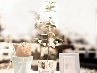 Per i nostri sposi 2016: Il Rito dell'albero