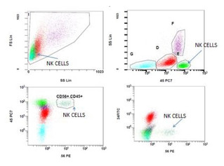 CD56, NK CELLS AND BLASTS