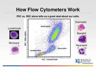 CELL IN FLOWCYTOMETRY
