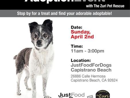 Adoption Event This Sunday!