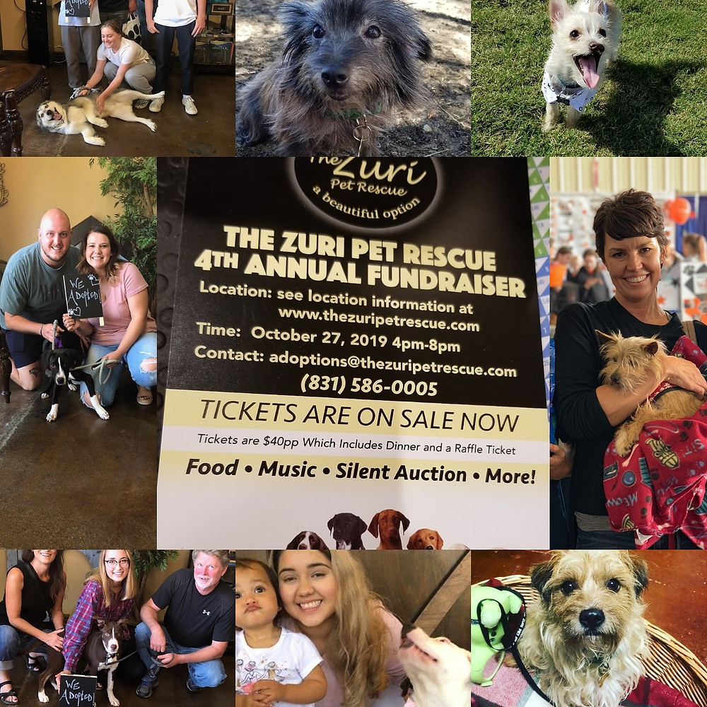 The Zuri 4th Anuual Fundraiser is closing in soon. Hurry and get your tickets to the event. The Kelly Boyz band will be playing, there will be a silent auction, and lots of food and fun. The Zuri Pet Rescue Helps hundreds of animals a year escape from Shelters and into the loving arms of forever families. Don't miss you chance to be a part of that. We look forward to seeing you there!