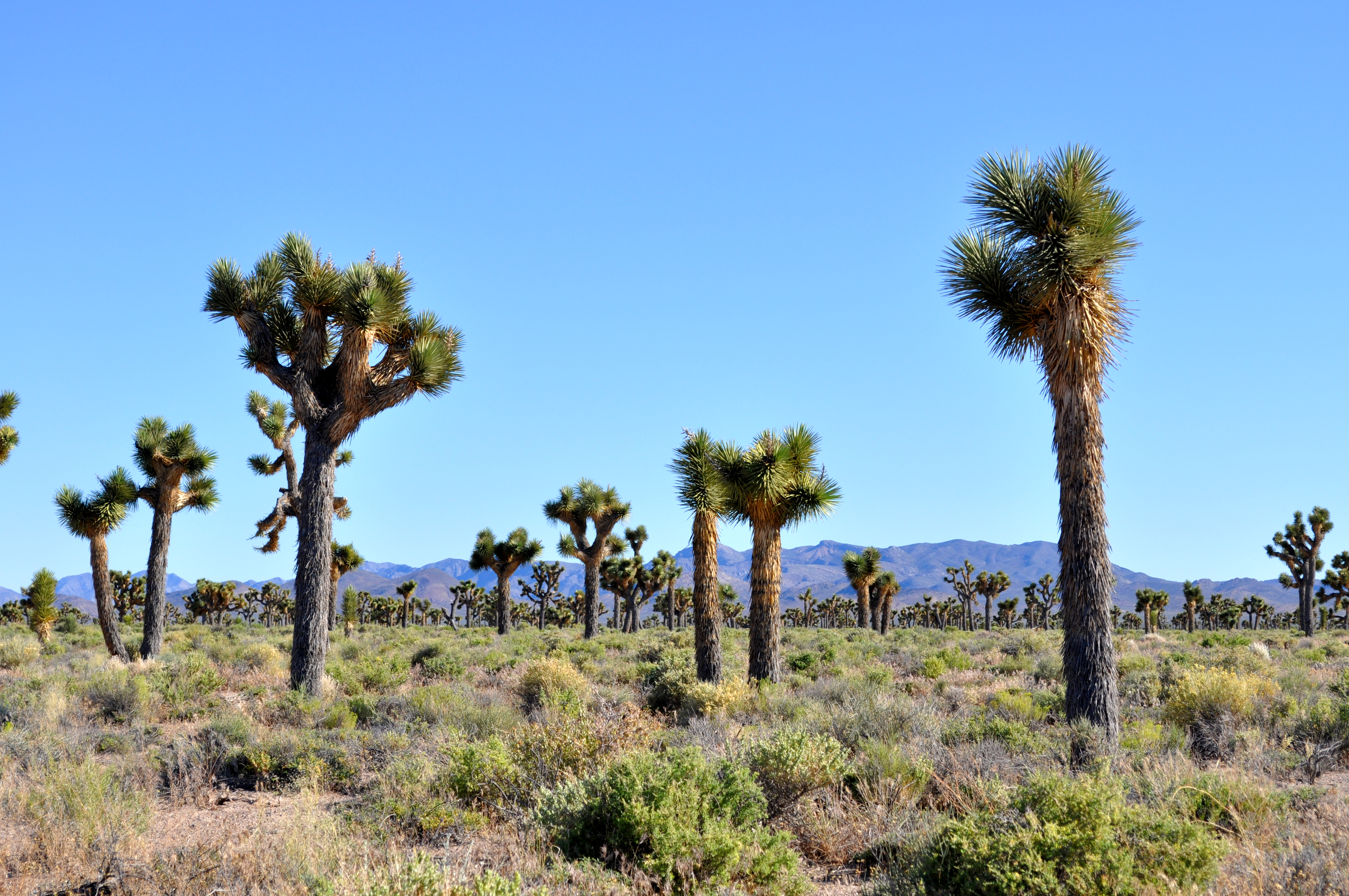 Joshua Tree | Area 51