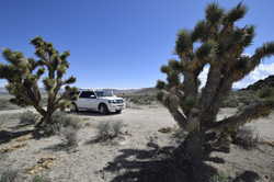 Truck in the Joshua Trees | Area 51