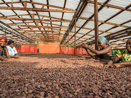 Worker Rights on Cocoa Farms