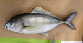 Prop Fish