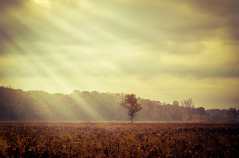 Shine - Chicago Photography