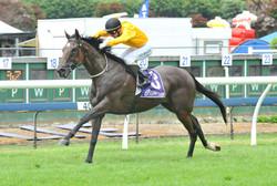 THE HOMBRE - ARC 26-12-2012 RACE IMAGES PHOTO.jpg